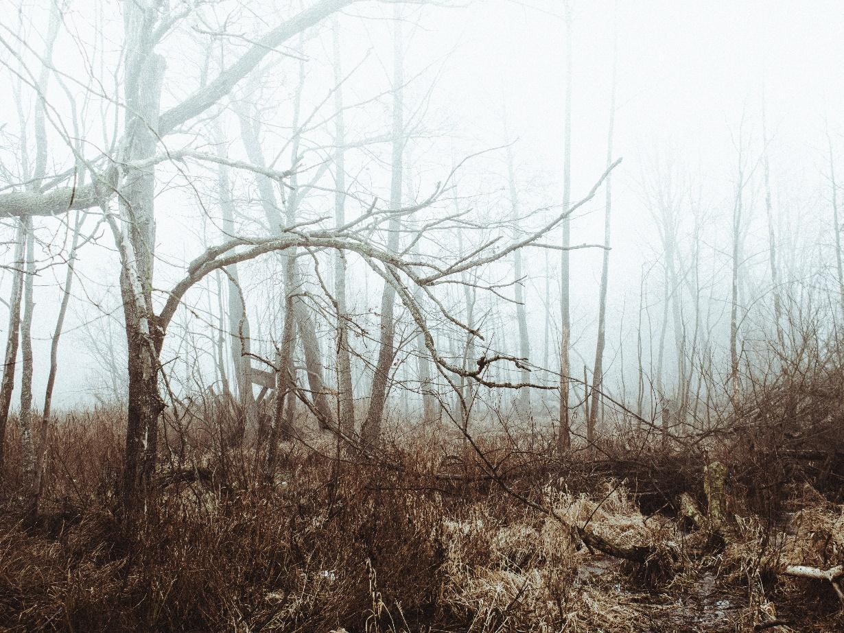 الخطوط من الطبيعة والأشجار