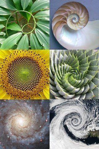 أشكال التناسب في الطبيعة