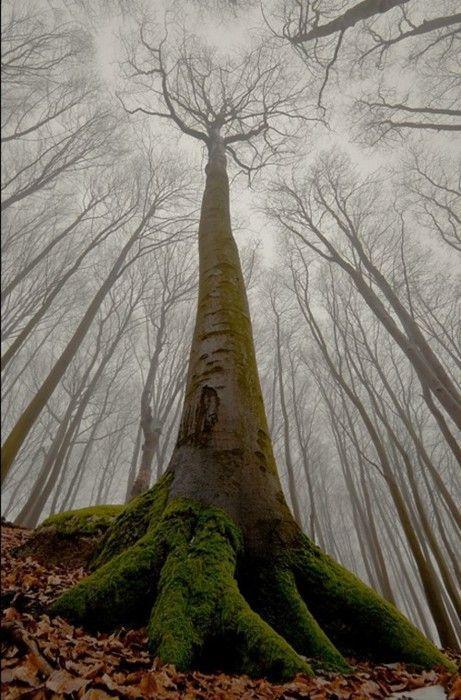 استلهام الخطوط من الأشجار